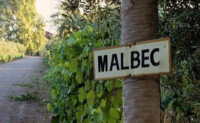 Malbec Vines, Club Tapiz